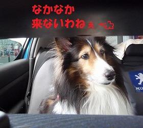 P1020546-t.jpg