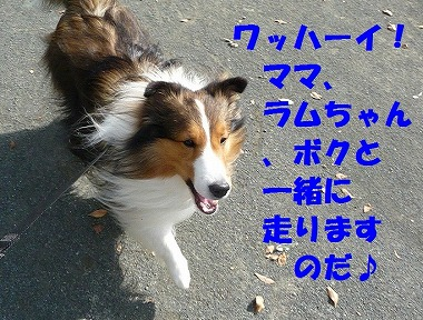P1020897-t.jpg