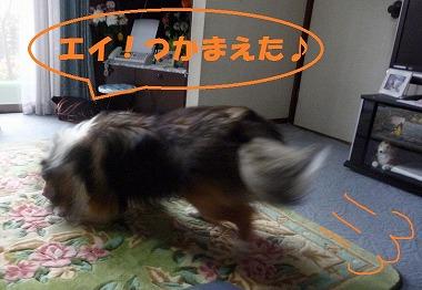 P1030018-t.jpg