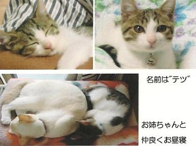 c2010-9-5テツ君