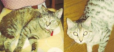 cあかりちゃんの姉妹猫