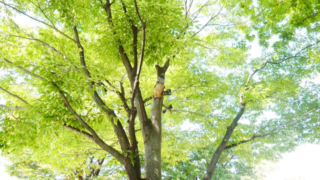 up_20101007_001_018.jpg