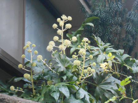 DSCN0503_20121125110114.jpg