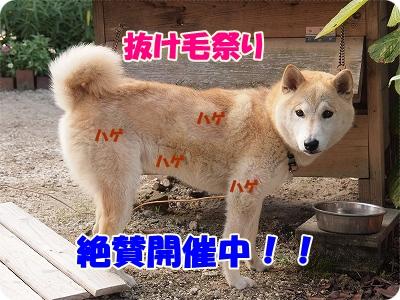 抜け毛祭り~!!
