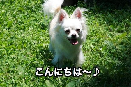 IMG_3004s.jpg