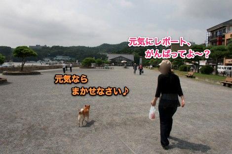 IMG_4731s.jpg
