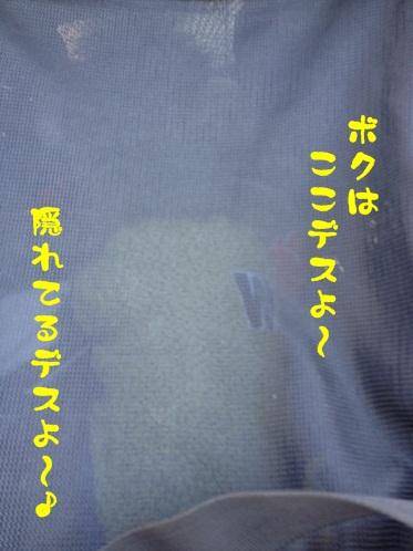 2012031602.jpg