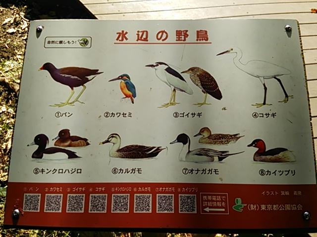 石神井公園09