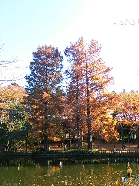 石神井公園10
