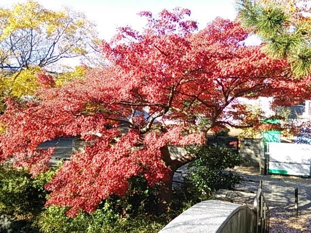 石神井公園13