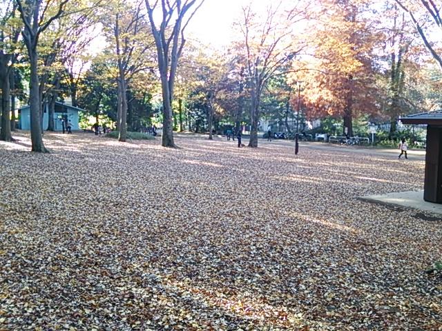 石神井公園17