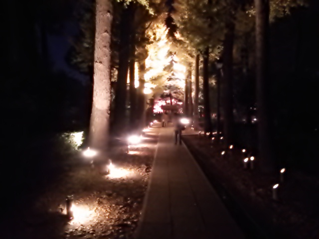 大田黒公園_a01