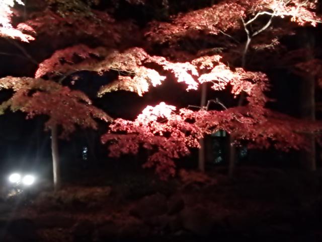 大田黒公園_a07