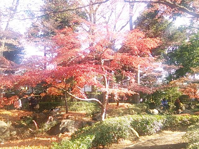 大田黒公園_a_h_01