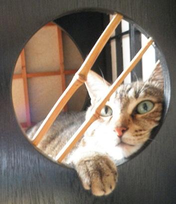 飾り窓の猫