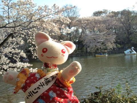 井の頭搬入の桜 009