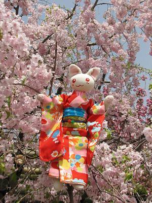 桜咲くにゃあこ