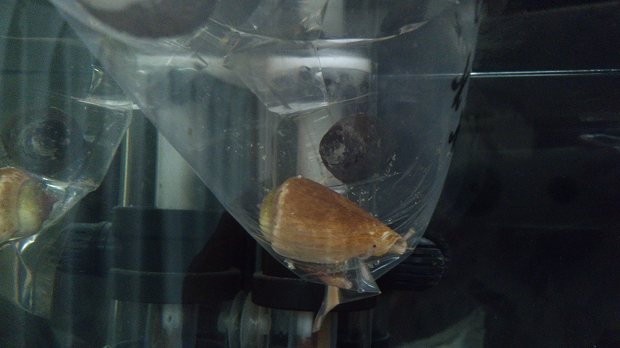 マガキ貝とか (1)