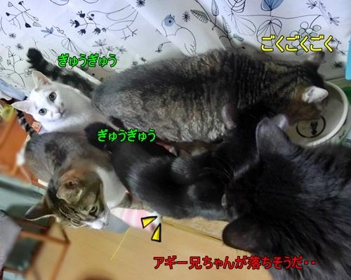 CIMG4824.jpg