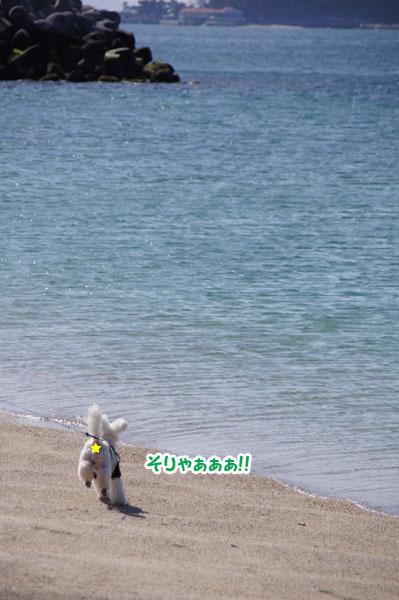 海と公園3