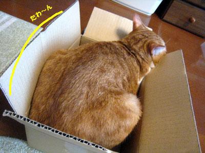 福袋の箱(福箱?)