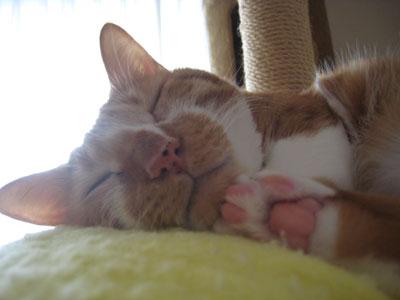 肉球見せびらかし寝