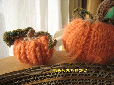 毛羽だつかぼちゃ