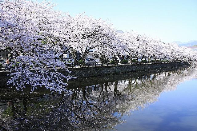 IMG_2029小田原城の桜