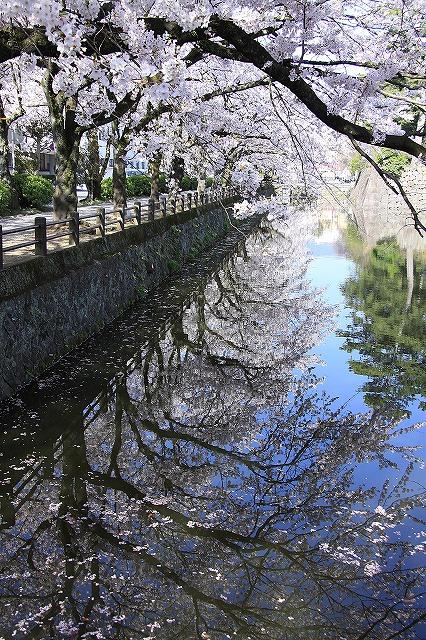 IMG_2034小田原城の桜