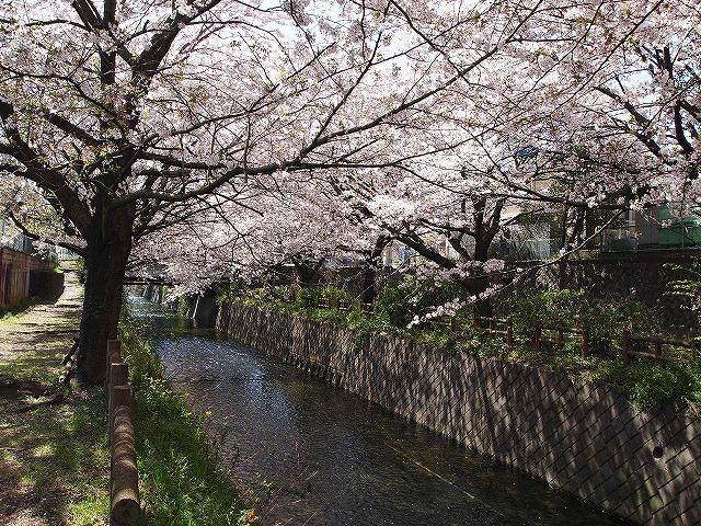 081桜散歩