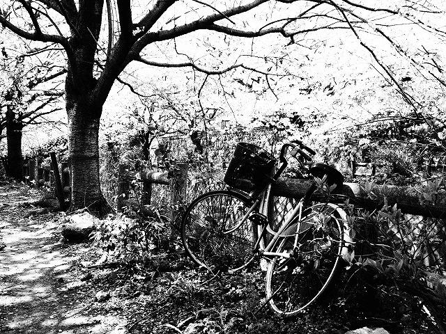 086桜並木の下で・・・