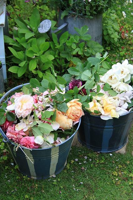 IMG_8821花がら切り