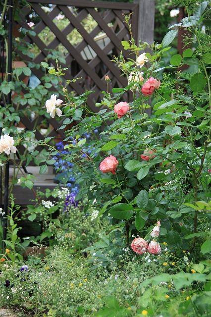 IMG_0556ゆうさんのお庭