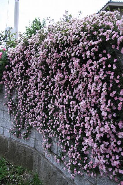 IMG_0590おじむくさんのお庭