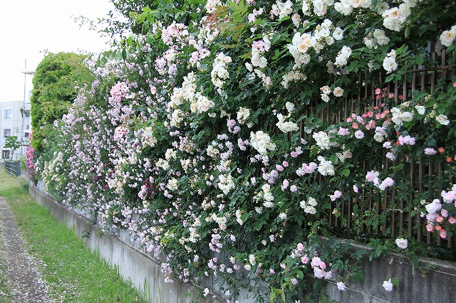 IMG_0592おじむくさんのお庭