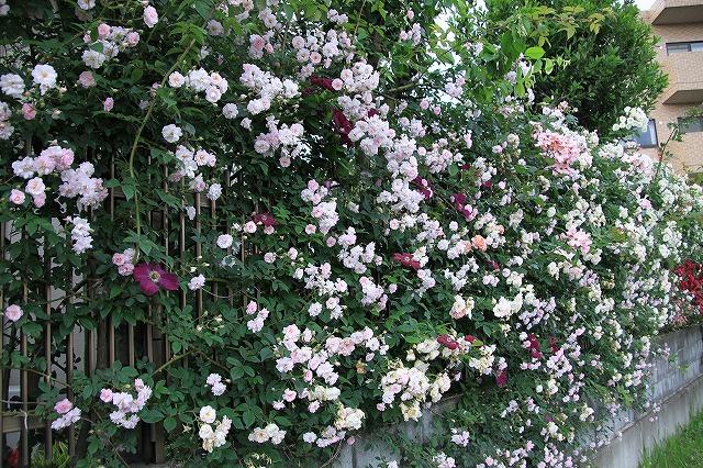 IMG_0594おじむくさんのお庭