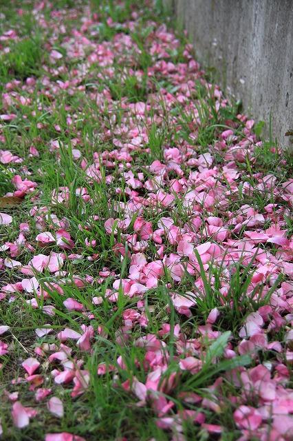 IMG_0597おじむくさんのお庭