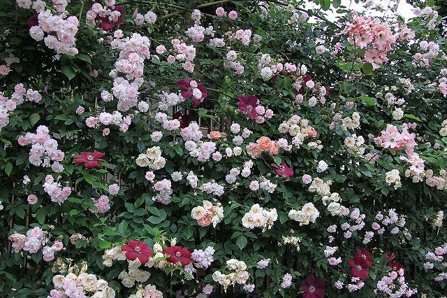 IMG_0600おじむくさんのお庭