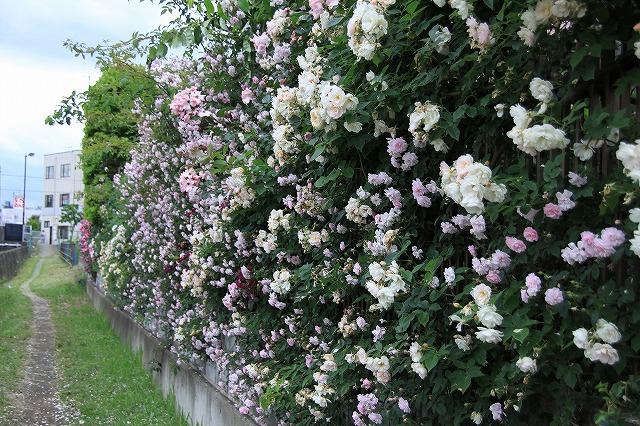IMG_0603おじむくさんのお庭