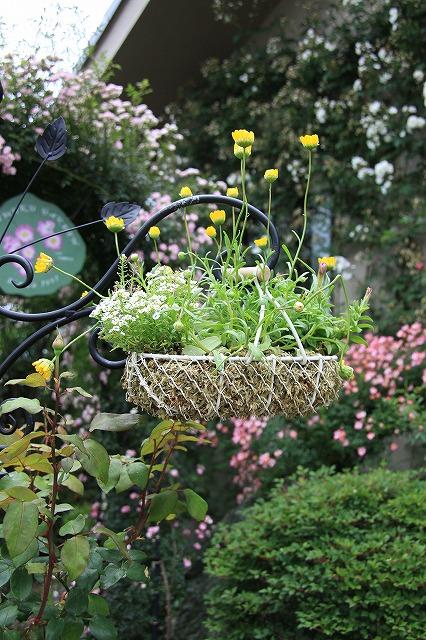 IMG_0615おじむくさんのお庭