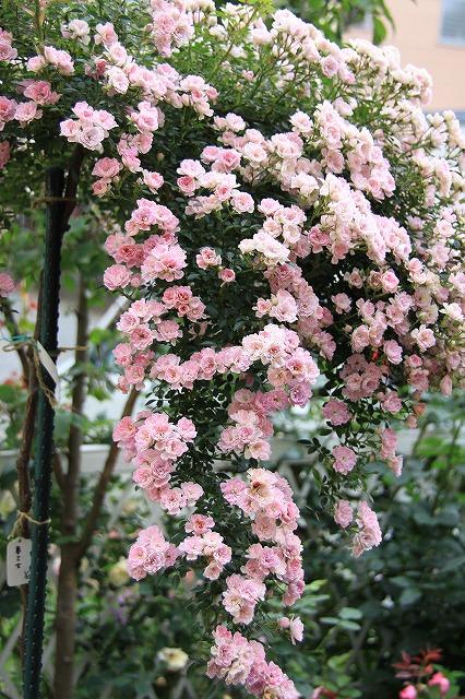 IMG_0635なおみんさんのお庭