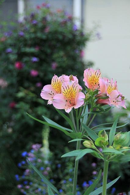 IMG_0662なおみんさんのお庭