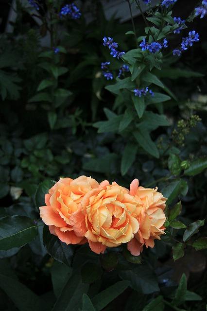 IMG_0665なおみんさんのお庭