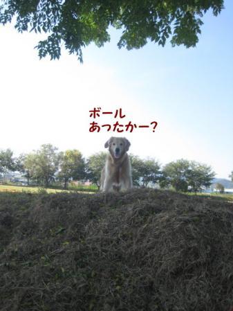 IMG_5265.jpg