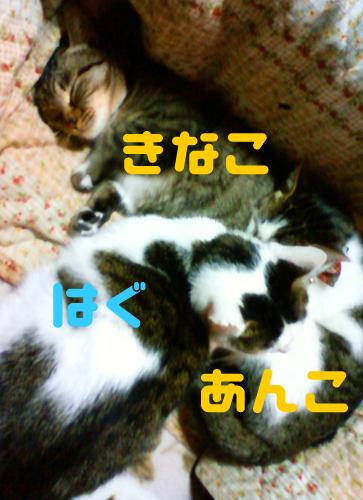 201211241306000.jpg