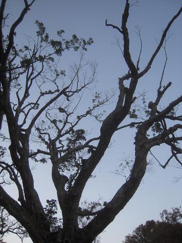 旅行 彫刻の森 木