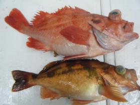 5鮮魚セット2.29