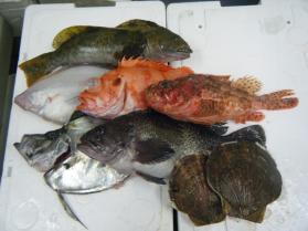 4鮮魚セット2.29