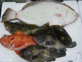 2鮮魚セット2.29