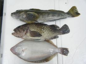1鮮魚セット2.29